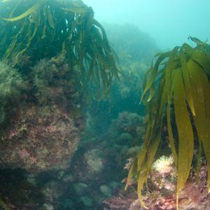 Cliffedge dive 2.jpg