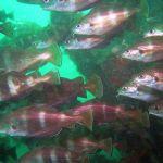FluerFish3.jpg