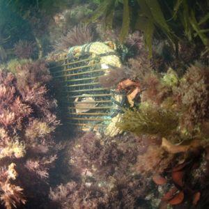 Cliffedge dive 5.jpg