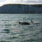 Dolphins-2.jpg